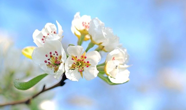 Meditations for A Happy Spring
